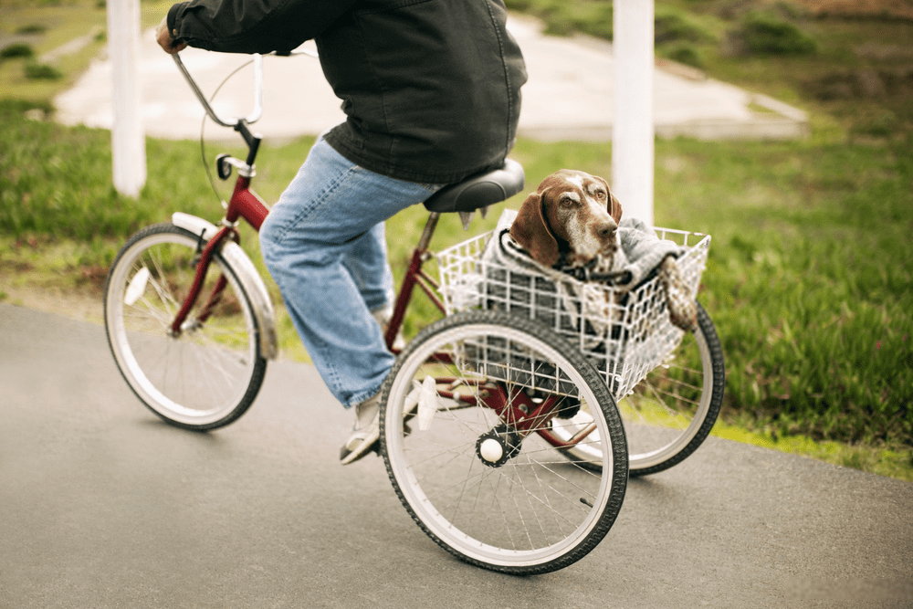 man carrying dog in tricycle basket